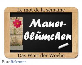 mot de la semaine - Mauerblümchen
